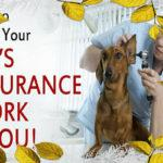 Pet Health Insurance in California – Pet Insurance and Your Pet!